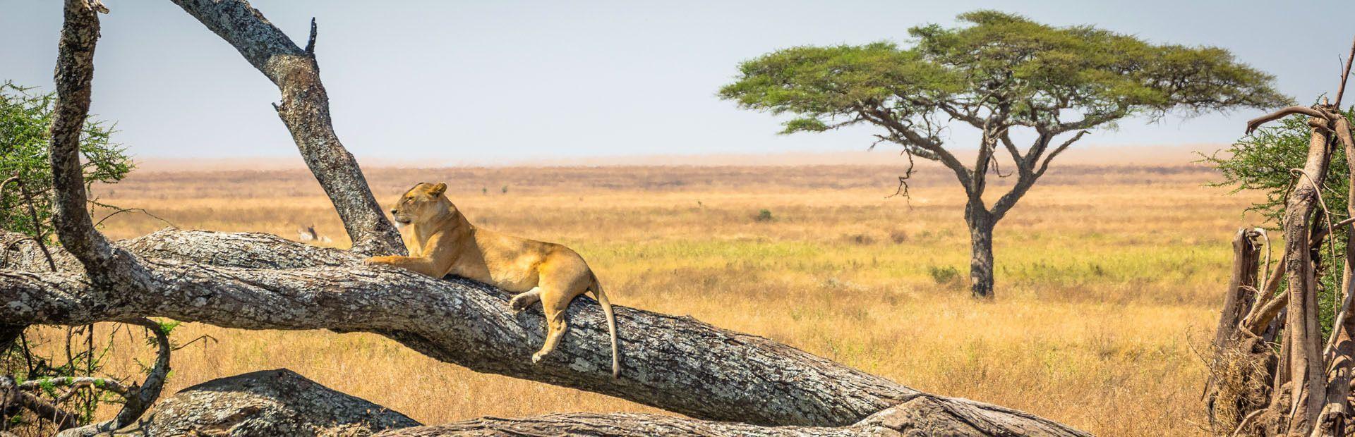 Sudafrica: Kruger National Park e la Panorama Route