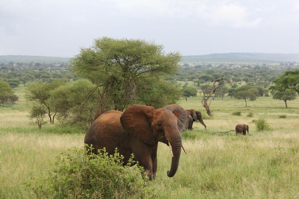 Tanzania: dalla savana a Zanzibar