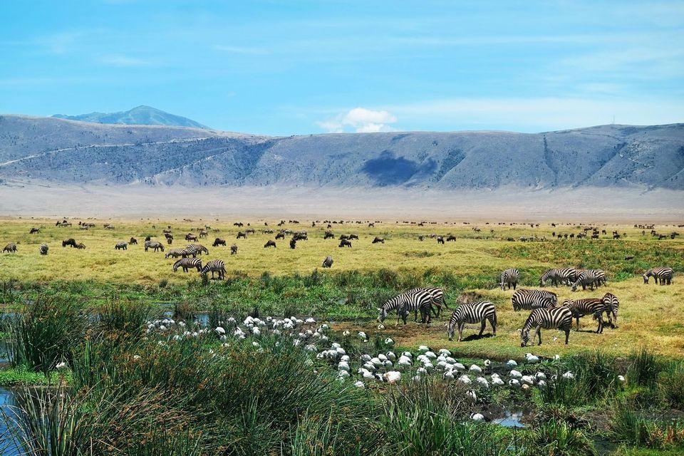Tanzania Adventure